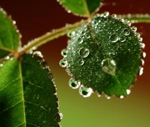 Life-Giving Rain